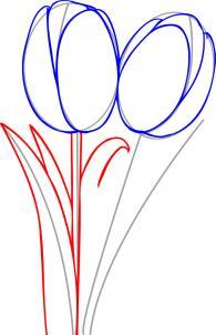 ve-hoa-tulip-3