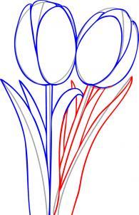 ve-hoa-tulip-4