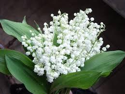 chậu hoa linh lan từ hạt cườm