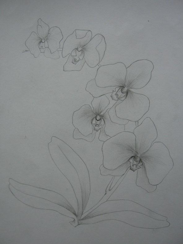 Vẽ cách điệu Hoa lan (bước 1)