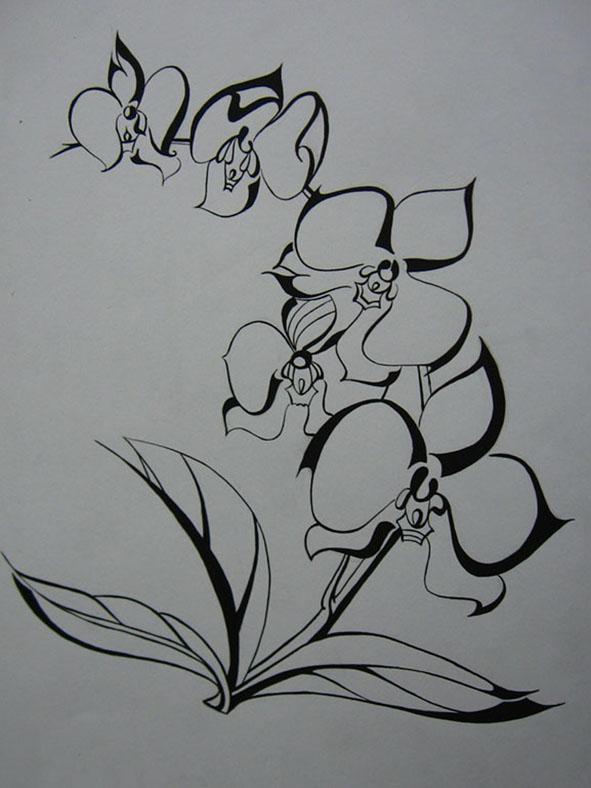 Vẽ cách điệu Hoa lan (bước 2)