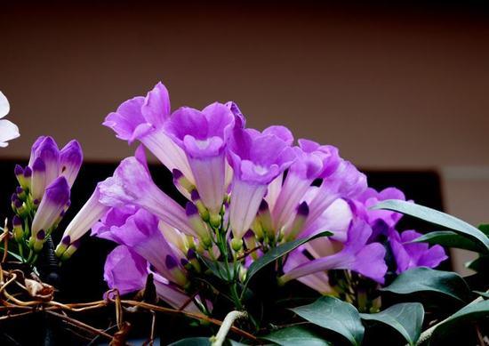 Hoa ánh hồng