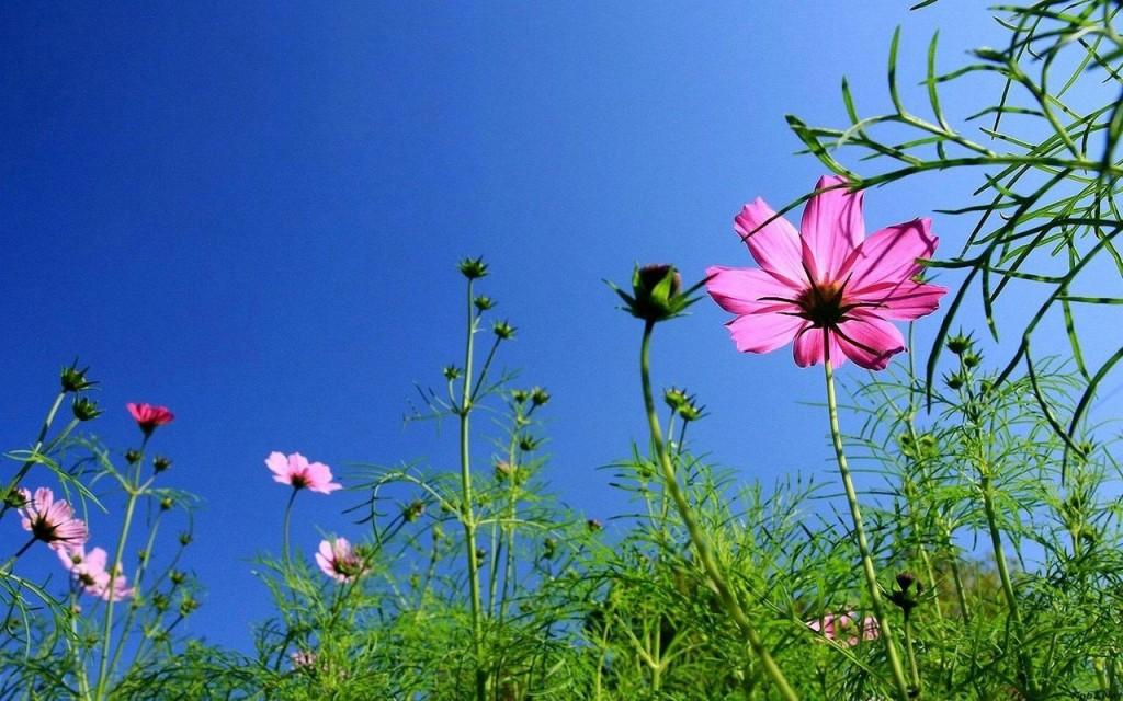 Hoa cúc sao nhái nhìn từ dưới lên