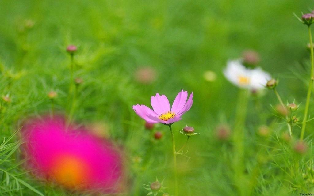 chụp cận cảnh bông hoa cúc bướm