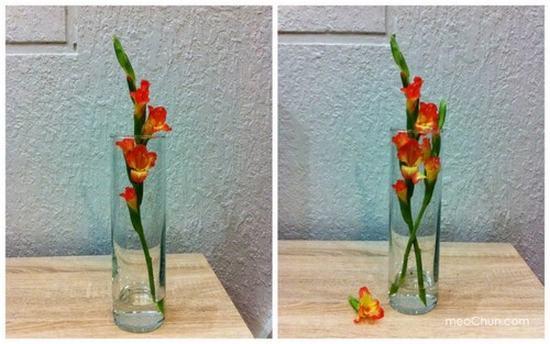 Giữ hoa layon tươi lâu trong ngày tết