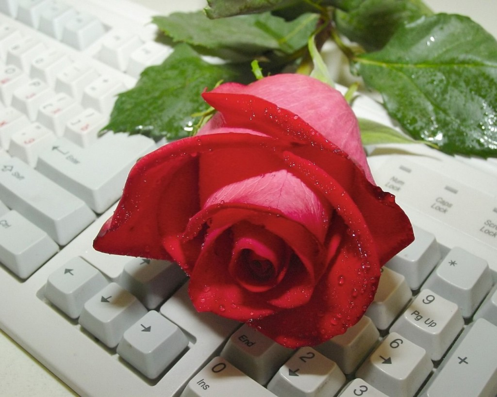 Hình nền hoa hồng cho máy tính