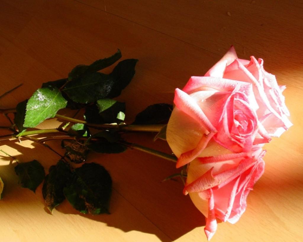 Ảnh hoa hồng nghệ thuật