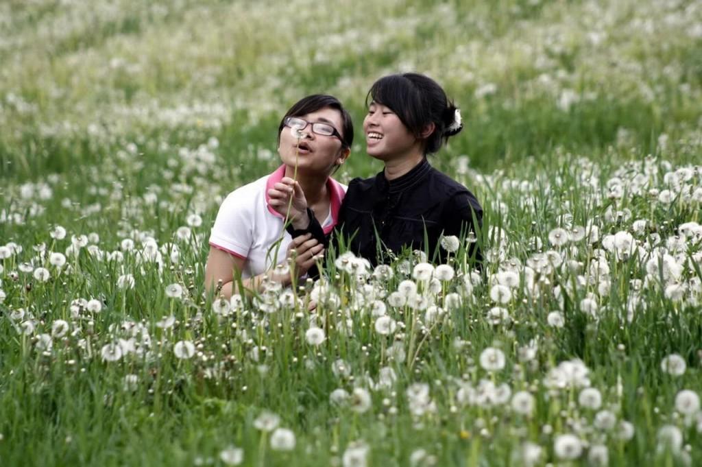nữ sinh chụp ảnh cùng cánh đồng hoa Bồ công anh
