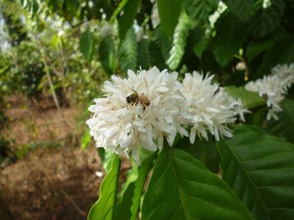 loài ong đang thụ phấn cho hoa