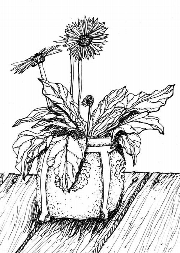 vẽ hoa đồng tiền bằng bút chì