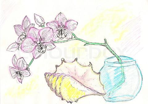 Hướng dẫn vẽ hoa lan