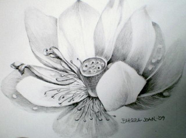 vẽ hoa sen bằng bút chì