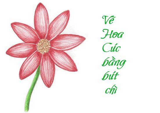 vẽ hoa cúc cực dễ thương