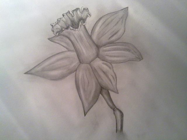 Cách vẽ hoa sen