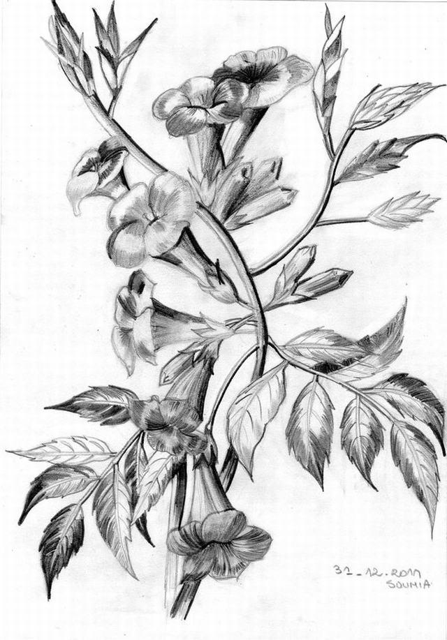 hình vẽ hoa giun (xác pháo) bằng bút chì