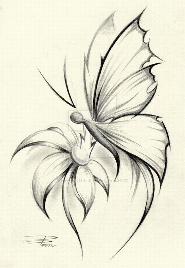 hình vẽ hoa cúc và bướm cách điệu bằng bút chì