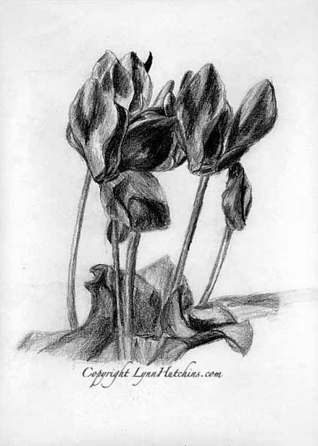 hình vẽ hoa anh thảo bằng bút chì
