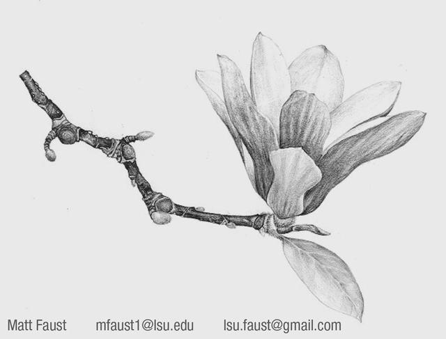 hình vẽ hoa hướng dương
