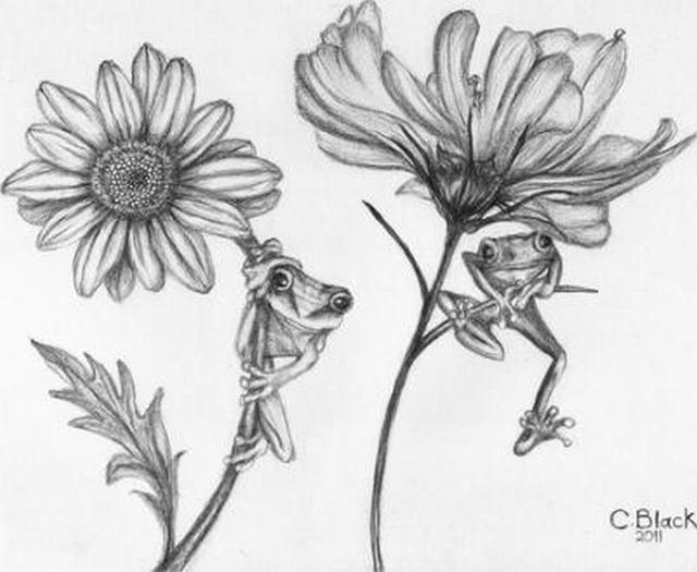 hình vẽ hoa cúc sao nháy và hoa hướng dương bằng bút chì