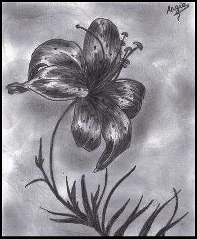 hình vẽ hoa lily - loa kèn bằng bút chì