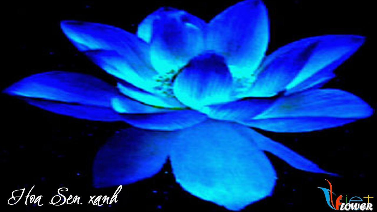 hoa-sen-xanh