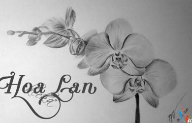 Hình vẽ hoa lan bằng bút chì