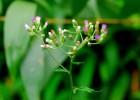 Hình nền những loài hoa dại nhỏ bé cực đẹp