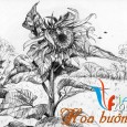 hình vẽ hoa hướng dương bằng bút chì
