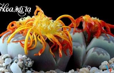 Những loài hoa kỳ lạ trên thế giới