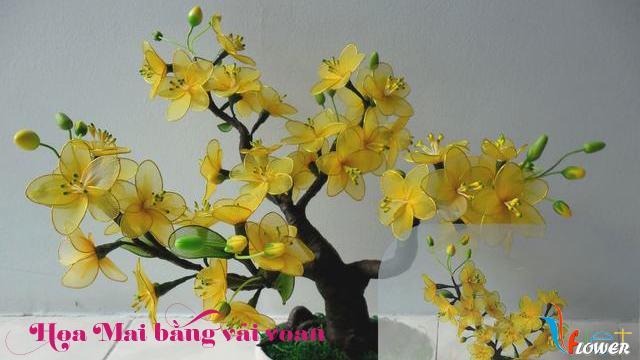 Làm hoa mai bằng vải voan