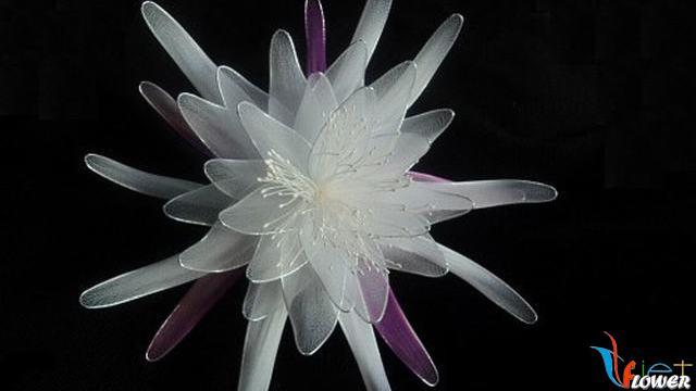 hoa quỳnh bằng vải voan