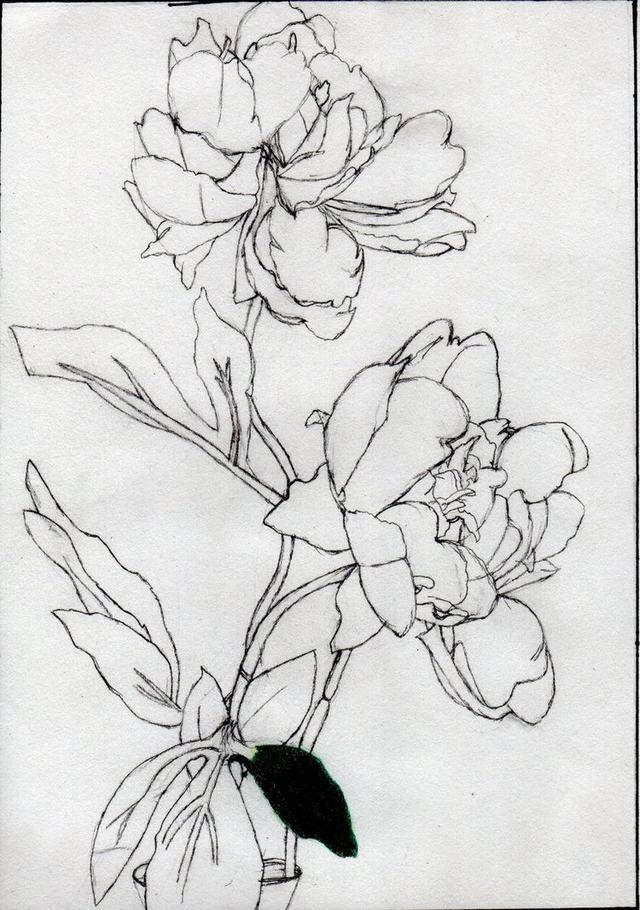 hình vẽ hoa bằng bút chì