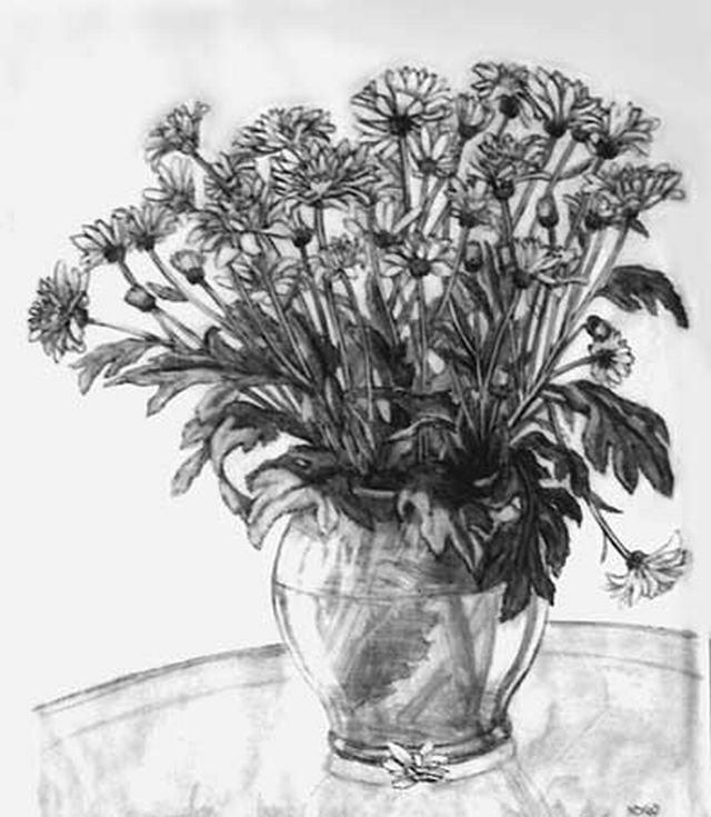 hình vẽ chậu hoa cúc tím bút chì