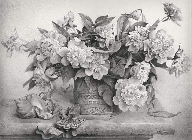 hình vẽ hoa mẫu đơn bằng bút chì