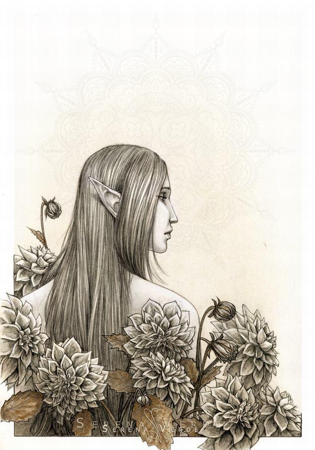 hình vẽ hoa thược dược bằng bút chì