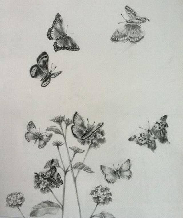 hình vẽ hoa ngũ sắc bằng bút chì