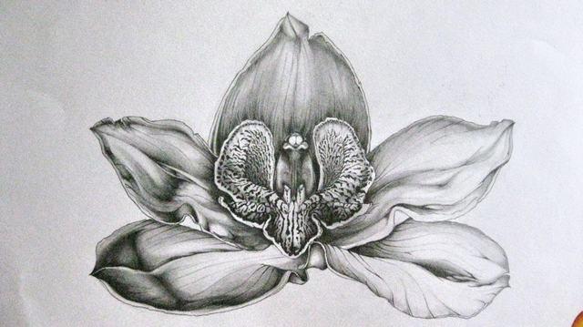 hình vẽ hoa lan hồ điệp bằng bút chì