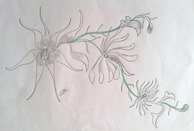 hình vẽ hoa cách điệu bằng bút chì