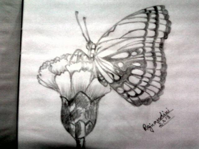hình vẽ hoa cẩm chướng và bướm bằng bút chì
