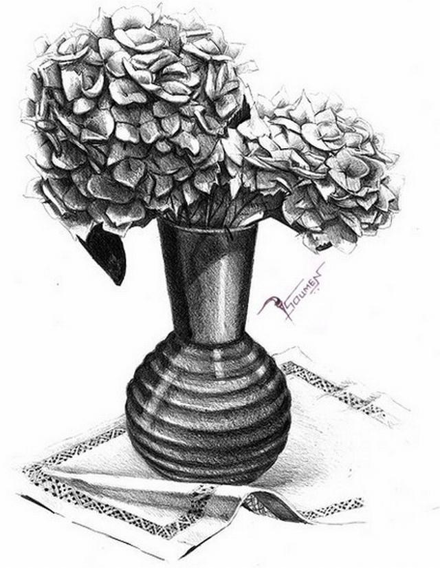 hình vẽ hoa cẩm tú cầu bằng bút chì