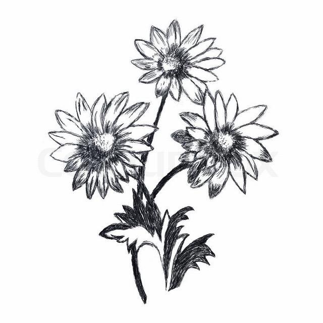 hình vẽ hoa dã quỳ bút chì