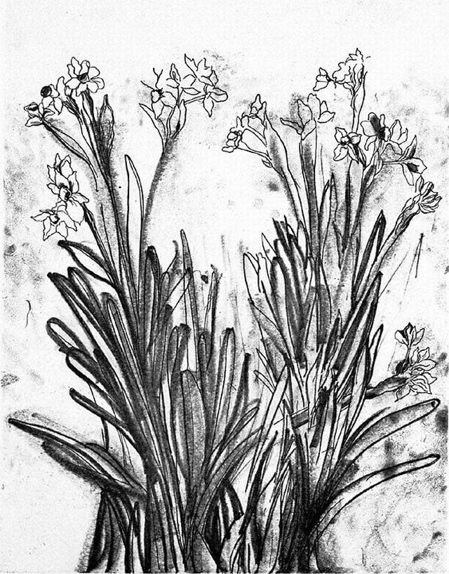 hình vẽ hoa lay ơn bút chì