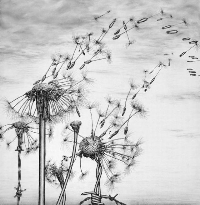 hoa-bo-cong-anh-bang-but-chi-Dandelion-pencil (3)