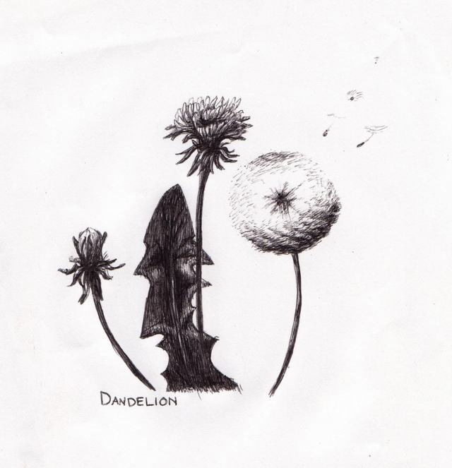 hoa-bo-cong-anh-bang-but-chi-Dandelion-pencil (5)