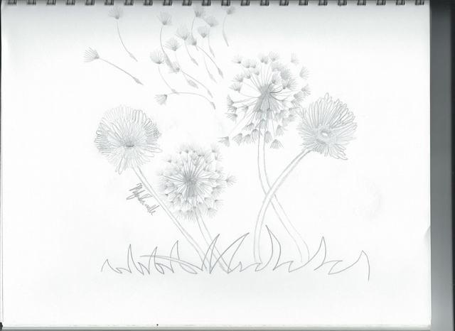 hoa-bo-cong-anh-bang-but-chi-Dandelion-pencil (6)
