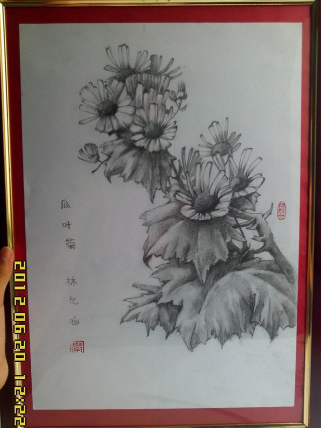 hoa-cuc-pencil-daisy (1)