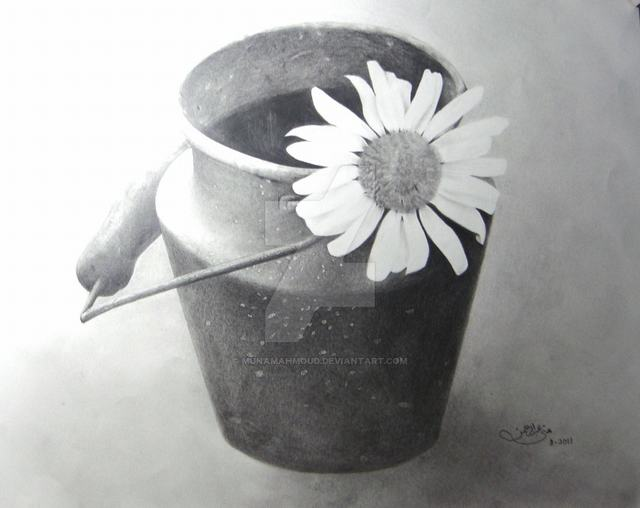 hoa-cuc-pencil-daisy (3)
