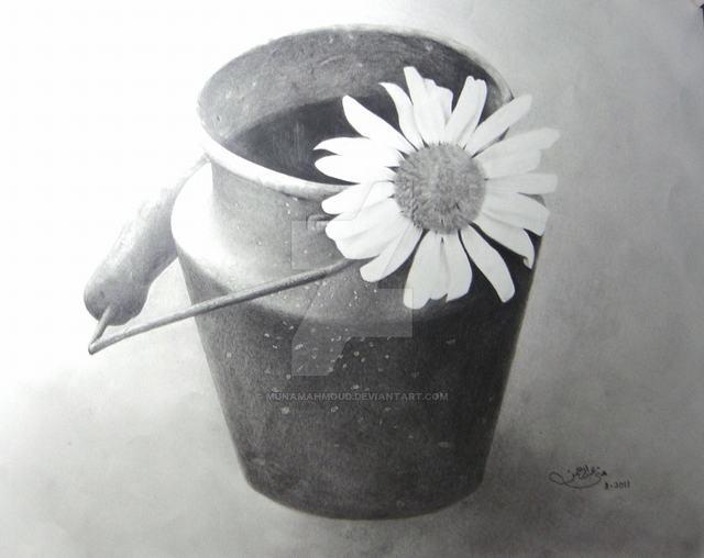 hoa-cuc-pencil-daisy (3)