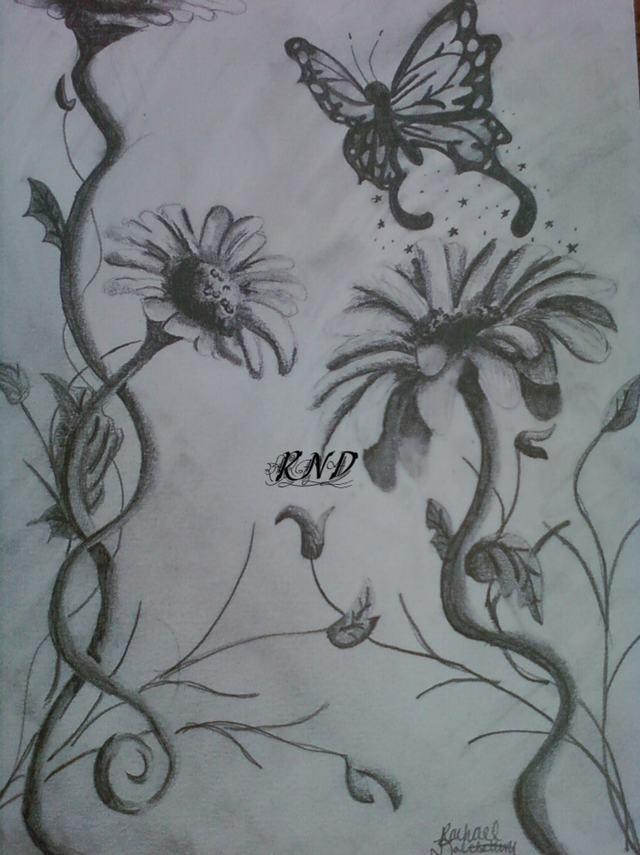 hoa-cuc-pencil-daisy (6)