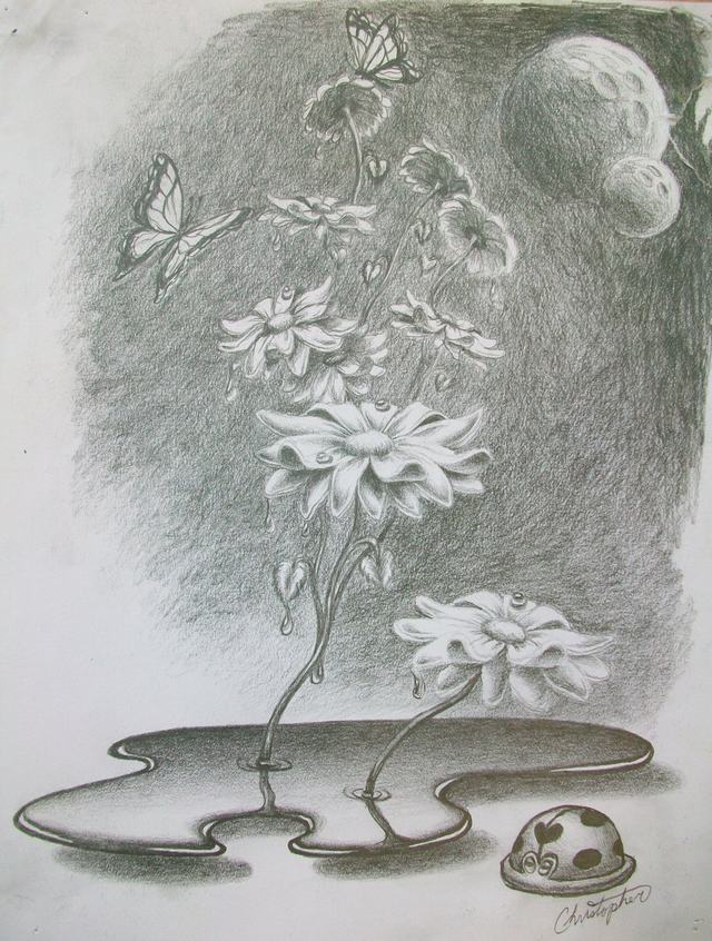 hoa-cuc-pencil-daisy (7)